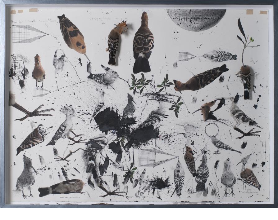 Hanaa Malallah - Self-Portrait 2. Drawing, digital print, hoopoe birds and pen nibs on paper in glass case 111 x 150 cm